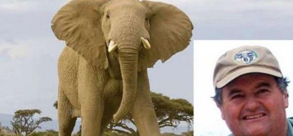 Elefante calpesta e uccide il cacciatore che gli stava sparando