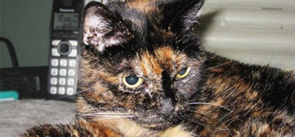 Tiffany Two il gatto più vecchio del mondo