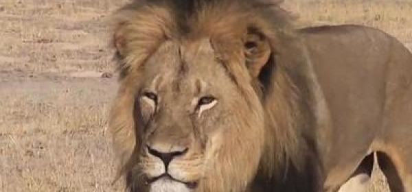 Zimbabwe Cecil leone